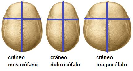 Examen del cráneo y cuerocabelludo