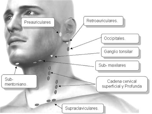 Exploración de los ganglios linfáticos de la cabeza ycuello