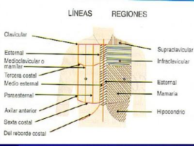 Resultado de imagen para lineas toracicas